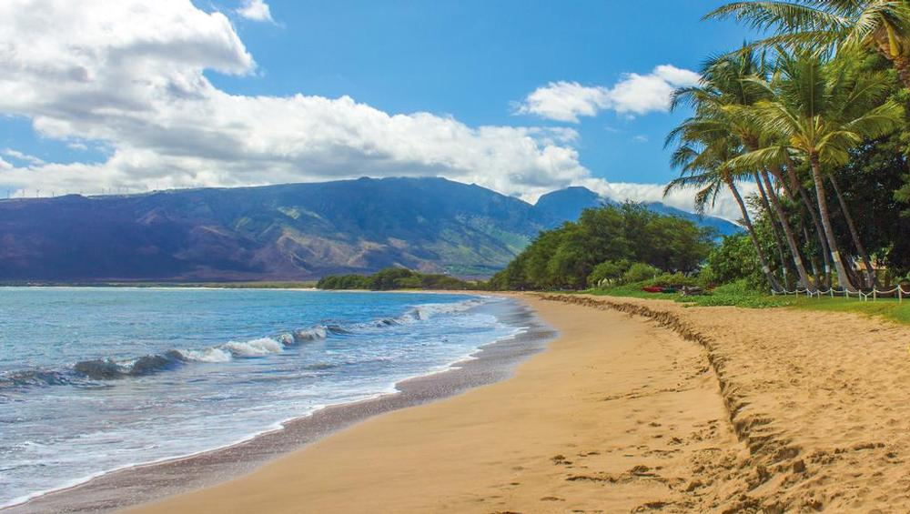 Beautiful shorelines of Maui lined with palm trees, crashing waves, and mountain scenery.