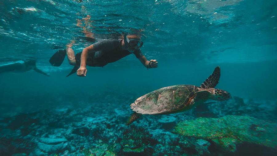 A couple snorkeling near a turtle and beautiful underwater reefs in Maui.