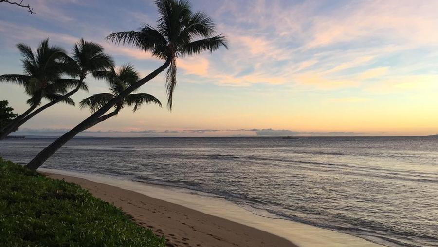 A stunning sunset on a pristine Maui beach, with palm trees leaning towards the sea.