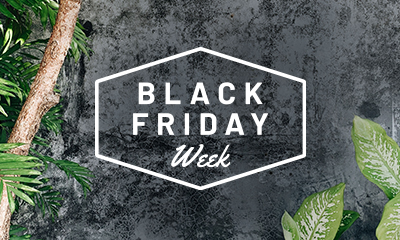 Exclusive Black Friday Week – Free Gratuities, Free Beverage Package, Unlimited WiFi, up to $400 Shore Excursion Credit, up to $750 Free Onboard Credit PLUS More!